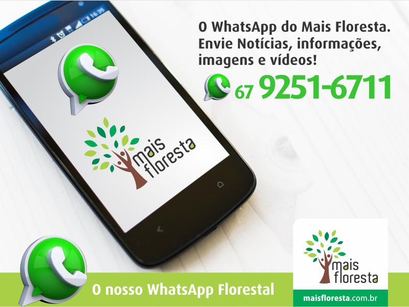 whatsapp mais floresta(1)